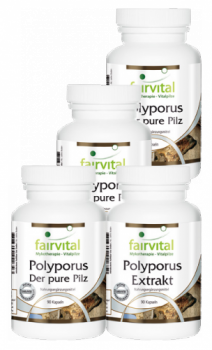 Polyporus supply for 3 months - 4 x 90 capsules-image